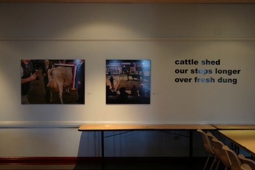 ekka haiku - cattle shed