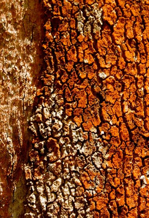 Rusted Bark CLK