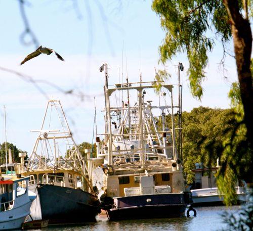 pelican rising clk