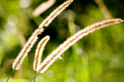 wetlands grasses clk