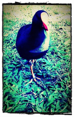 Web Bird